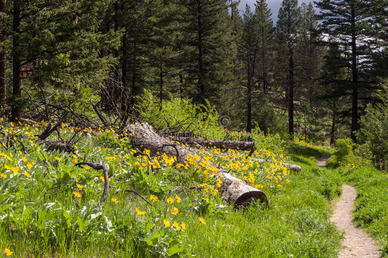 Download Nature trail wildflowers stock image. Image of environment - 31130677
