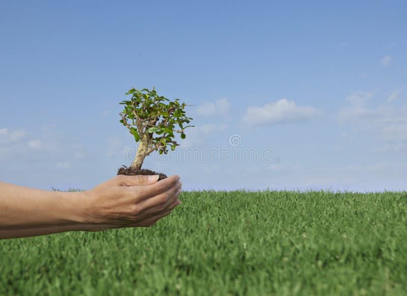Nature tree. royalty free stock image