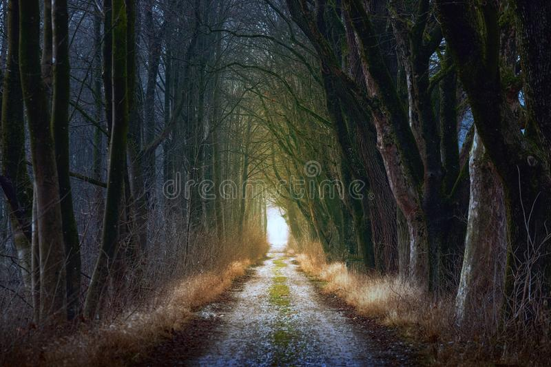 Nature, Tree, Forest, Path stock photography