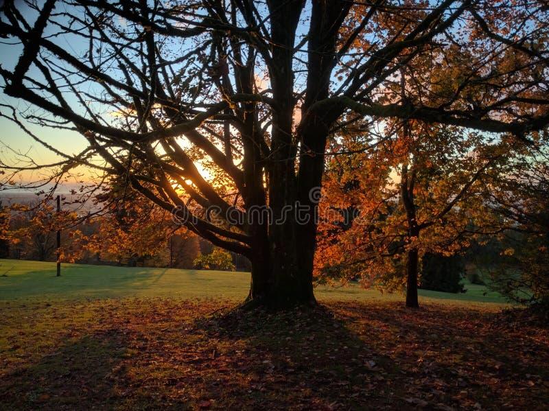 Nature, Tree, Leaf, Autumn Free Public Domain Cc0 Image