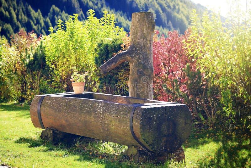 Nature, Tree, Plant, Vegetation Free Public Domain Cc0 Image