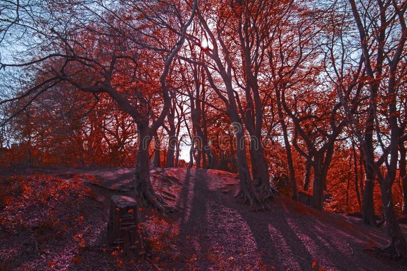 Nature, Tree, Red, Autumn stock photo