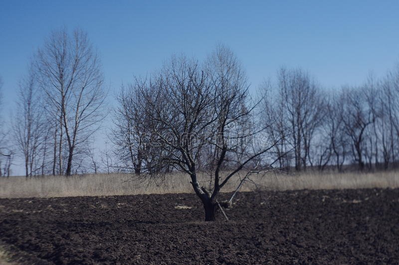 nature tree trees landscape field early spring bare tree sky royalty free stock image