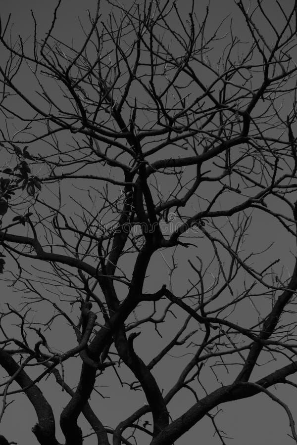 Nature_Tree immagine stock