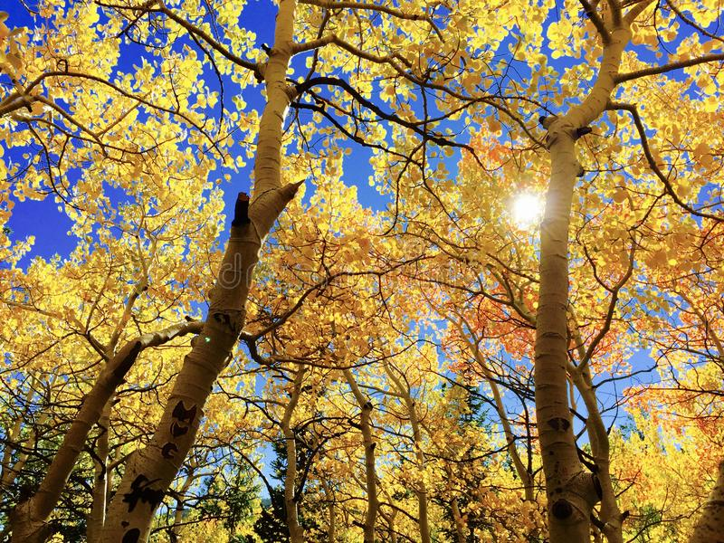 Nature, Tree, Yellow, Autumn stock photos
