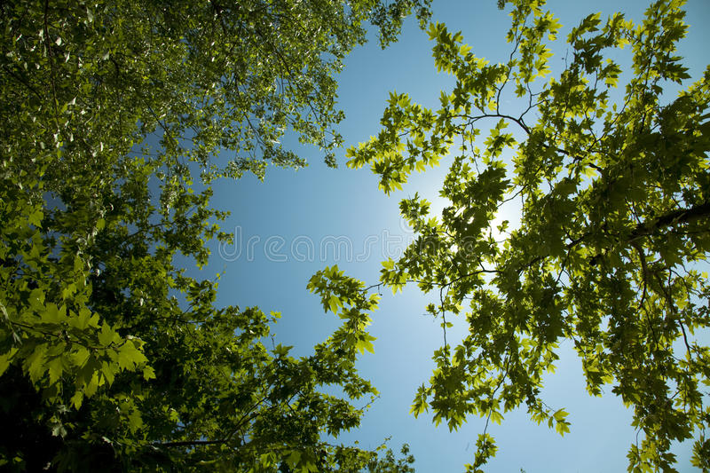 Nature. Trees, sun and blue sky royalty free stock images