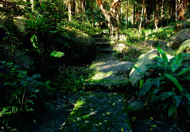 Nature  tropical garden  plant   decorate  at path way in  the forest stock images