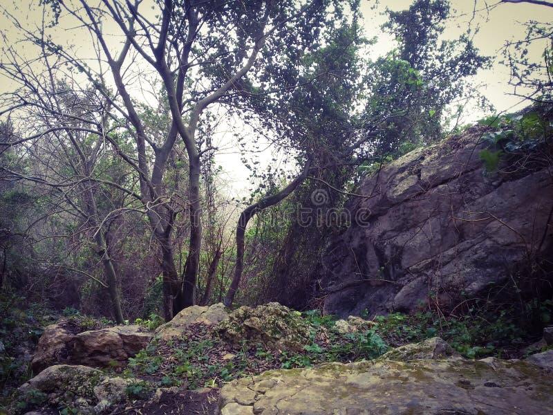 Nature - Tunisia - ain drahem stock photography
