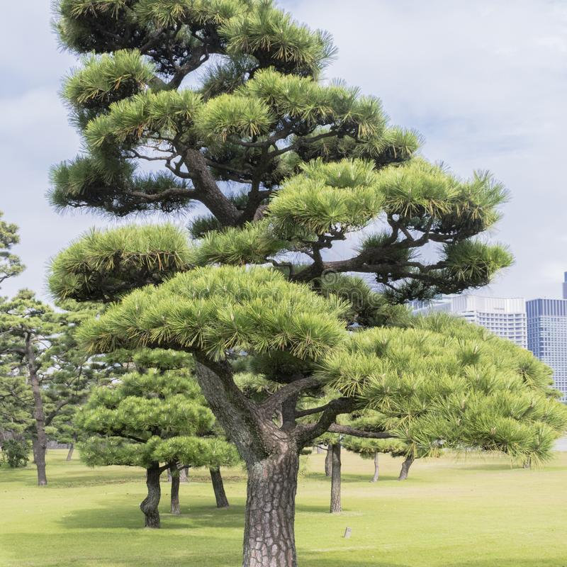 Nature or urban background with view of park in Tokyo, Japan stock photography