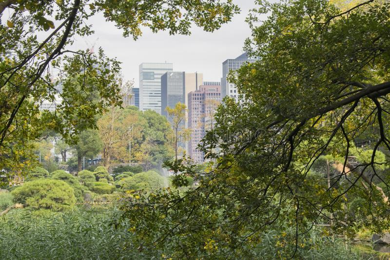 Nature or urban background with view of park in Tokyo royalty free stock photo