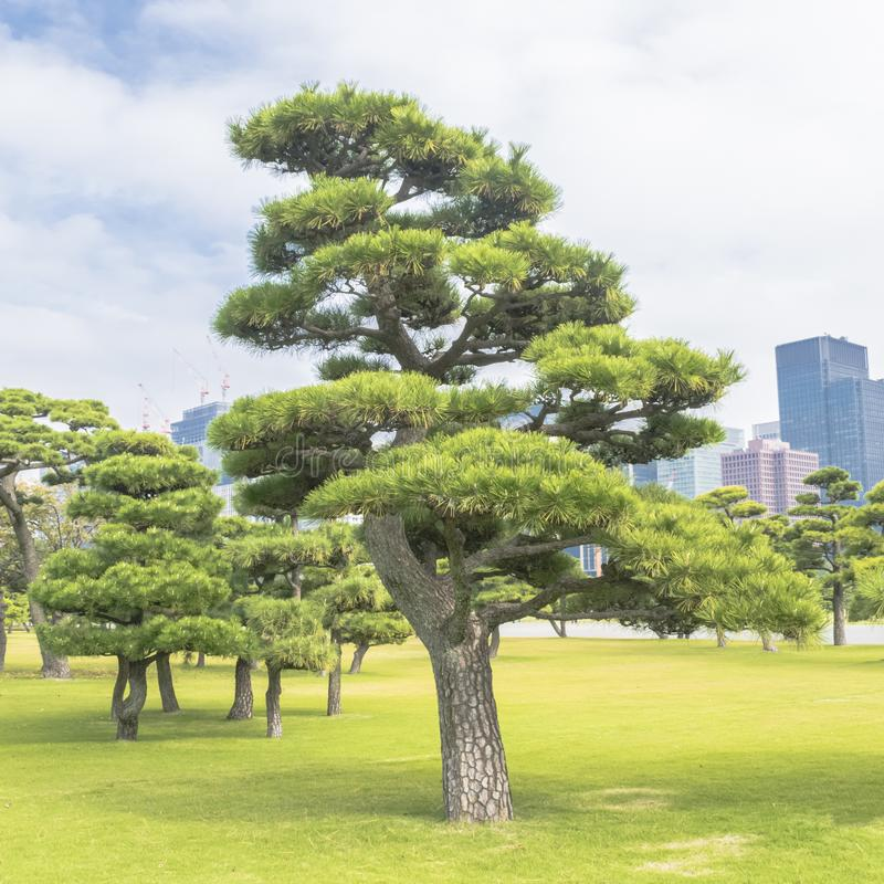 Nature or urban background with view of park in Tokyo royalty free stock image