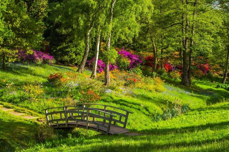 Nature, Vegetation, Botanical Garden, Flower royalty free stock photos
