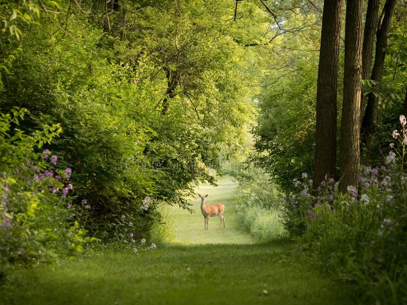 Nature, Vegetation, Green, Woodland stock images