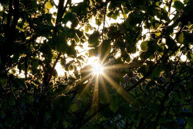 Nature, Vegetation, Leaf, Branch Free Public Domain Cc0 Image