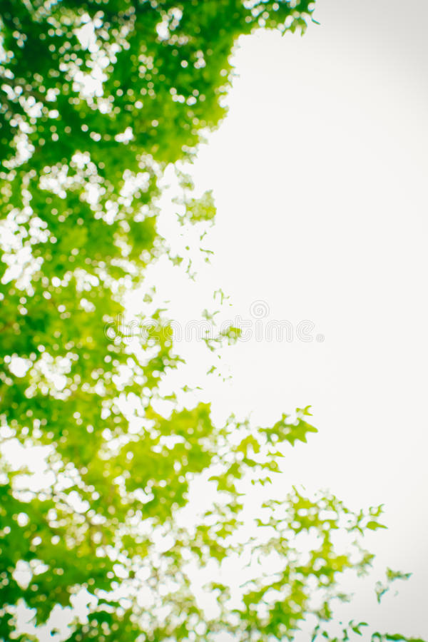 Nature verte abstraite brouillée images libres de droits