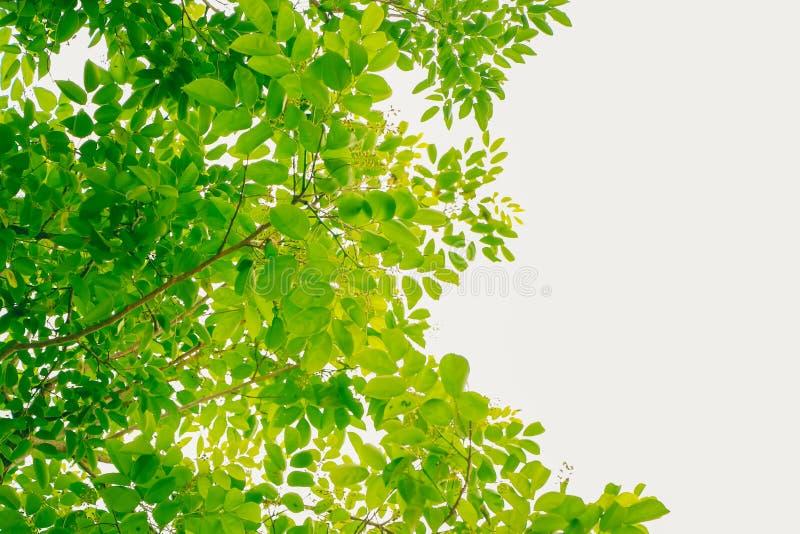 Nature verte abstraite brouillée photographie stock