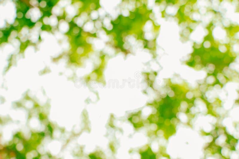 Nature verte abstraite brouillée photo stock