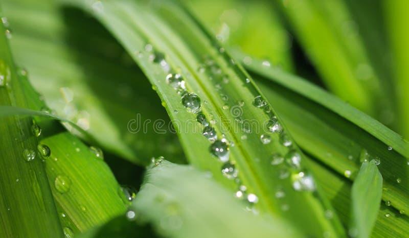 Nature Verte De Fond Photo libre de droits