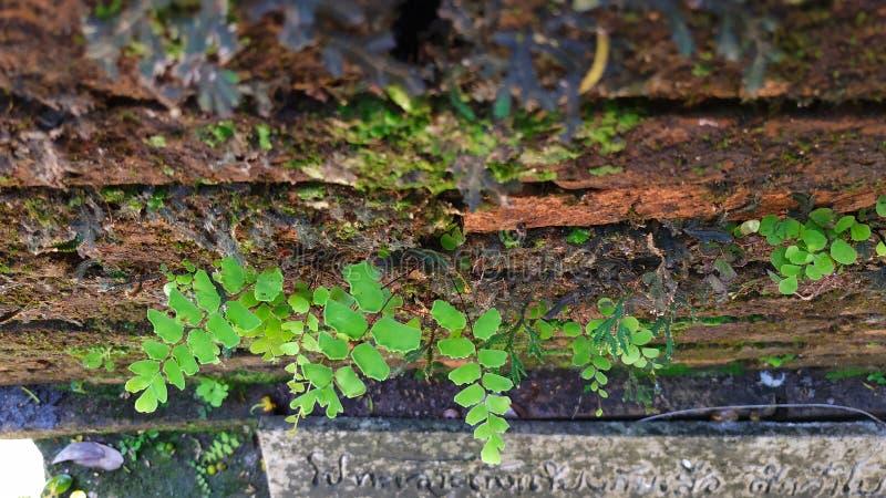 nature verte de mur de calme de greentree image stock