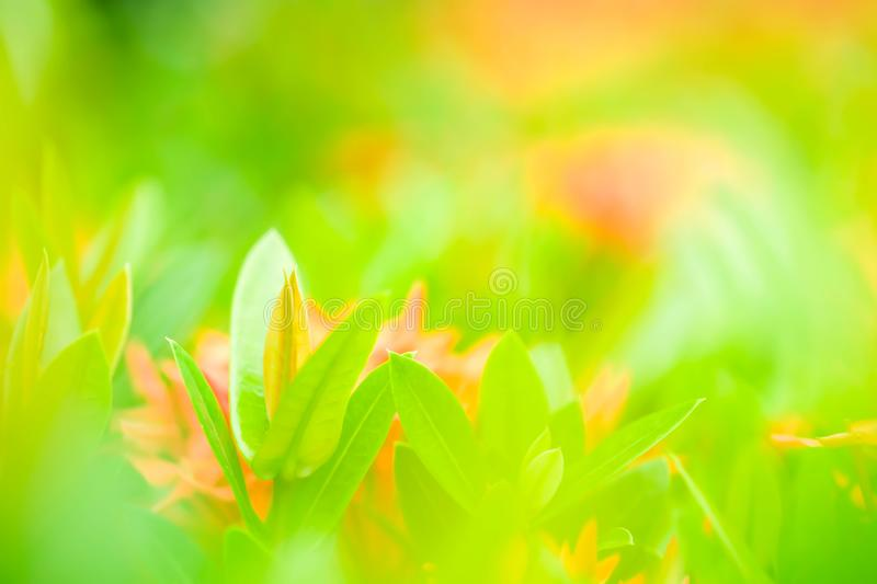 Nature view of beautiful green young leaves in the colorful back stock photo