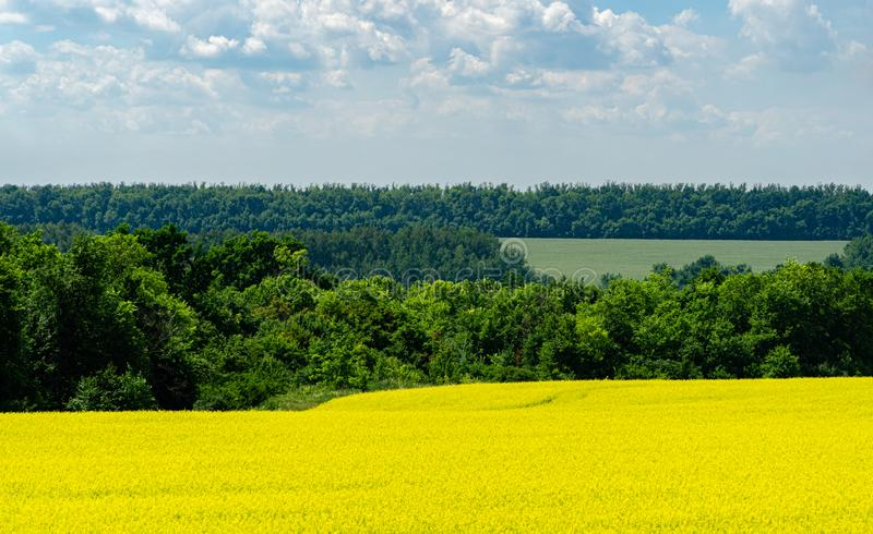Nature view of bright yellow oilseed rape field with green forest on horizon and blue sky with white clouds stock images