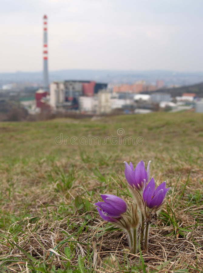 Download Nature vs. industry stock image. Image of urban, factory - 10720447