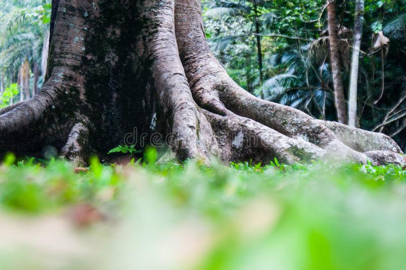 Tree roots on green grass. royalty free stock photography