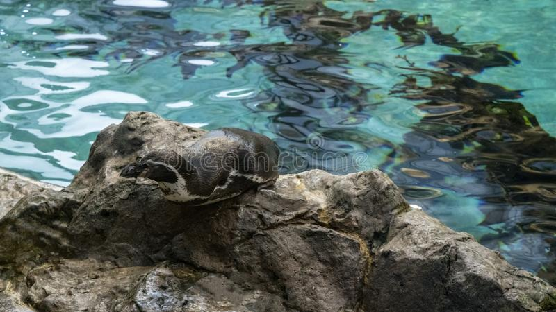 Nature water blue whit fish penguins mountain plants royalty free stock photography