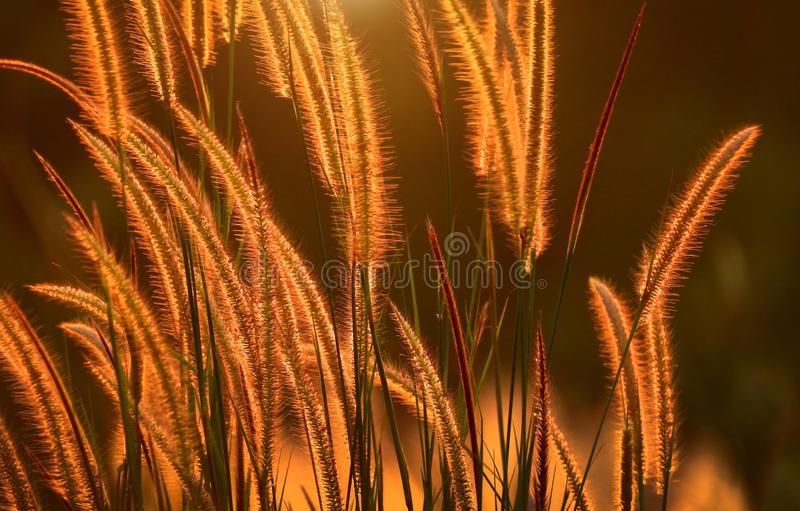 Nature Wildflower at sunlight on sunset royalty free stock photo