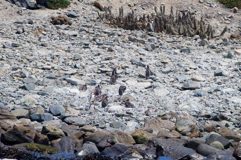 Nature and wildlife sanctuary Chile stock photo