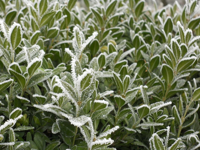 Nature in winter. A colder day over plants. They are cover with a white layer of ice royalty free stock image