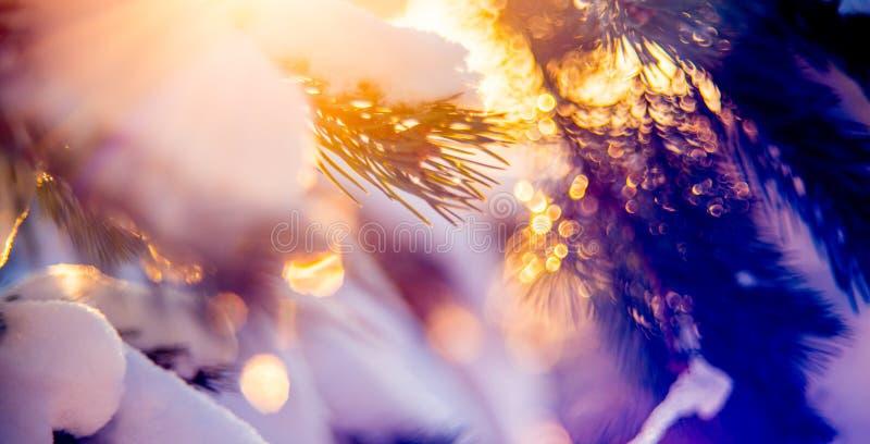 Nature winter detail macro. Pine twigs and bokeh royalty free stock image