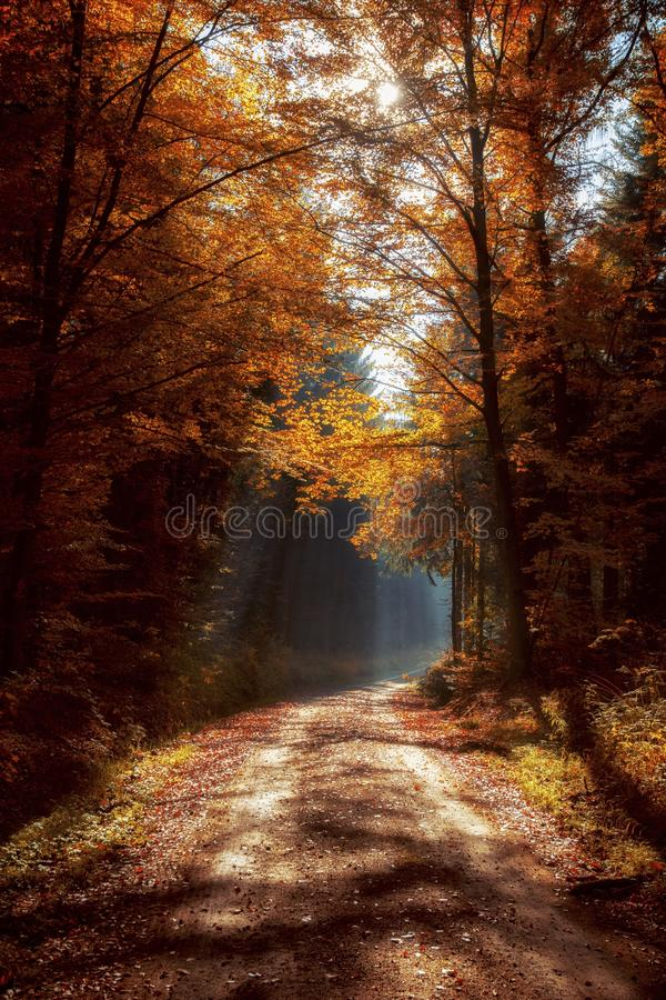 Nature, Woodland, Autumn, Forest stock images