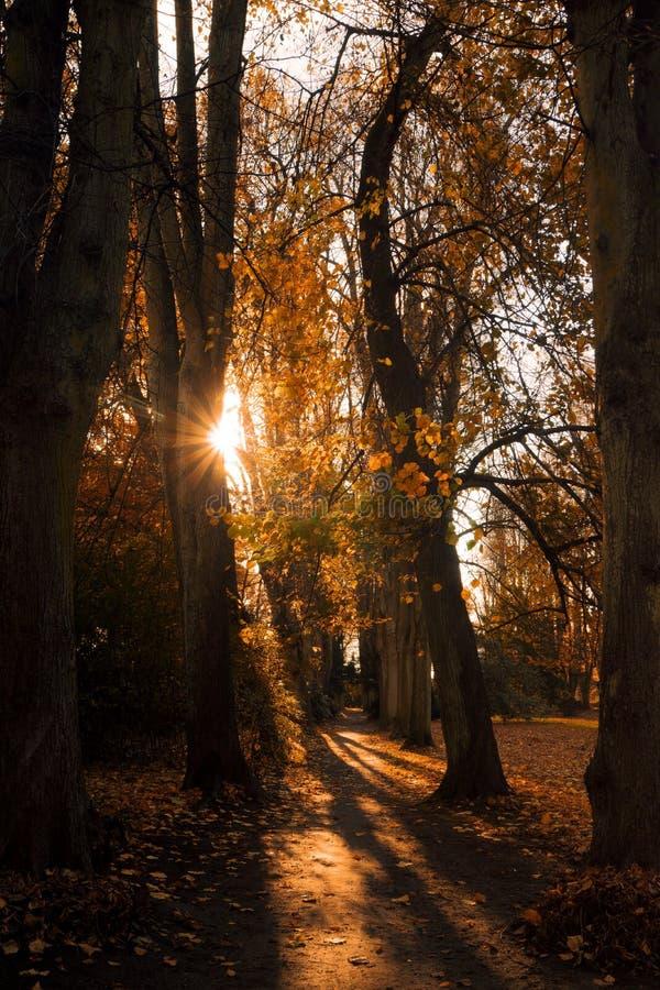 Nature, Woodland, Tree, Autumn royalty free stock photography