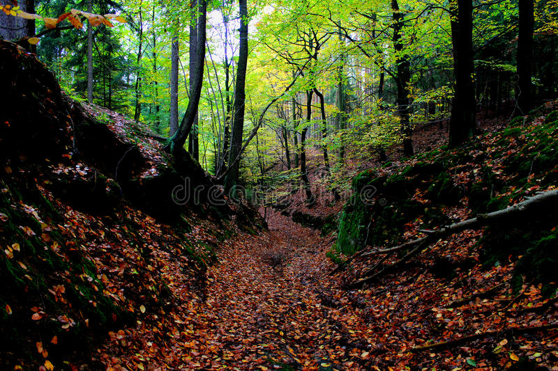 Nature. World europa path entrance gate old trees nature forest pine forests leaf fall revival tour cycling tourism stock photo