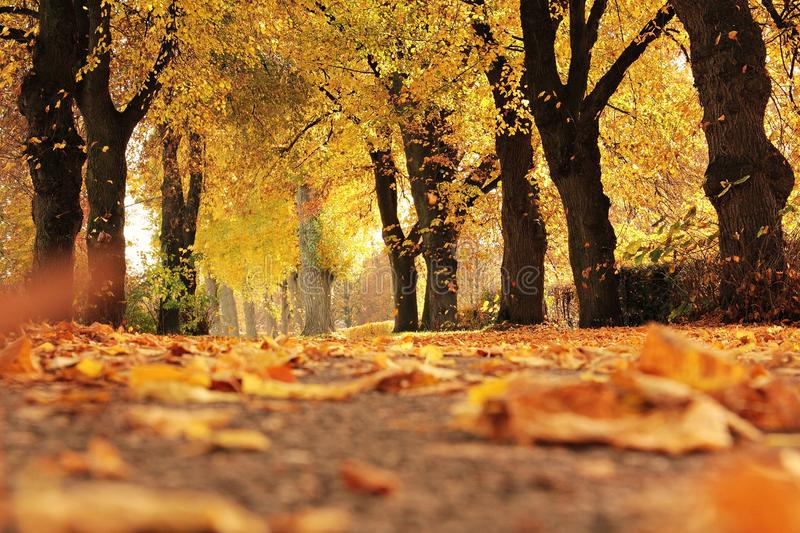 Nature, Yellow, Autumn, Leaf royalty free stock images