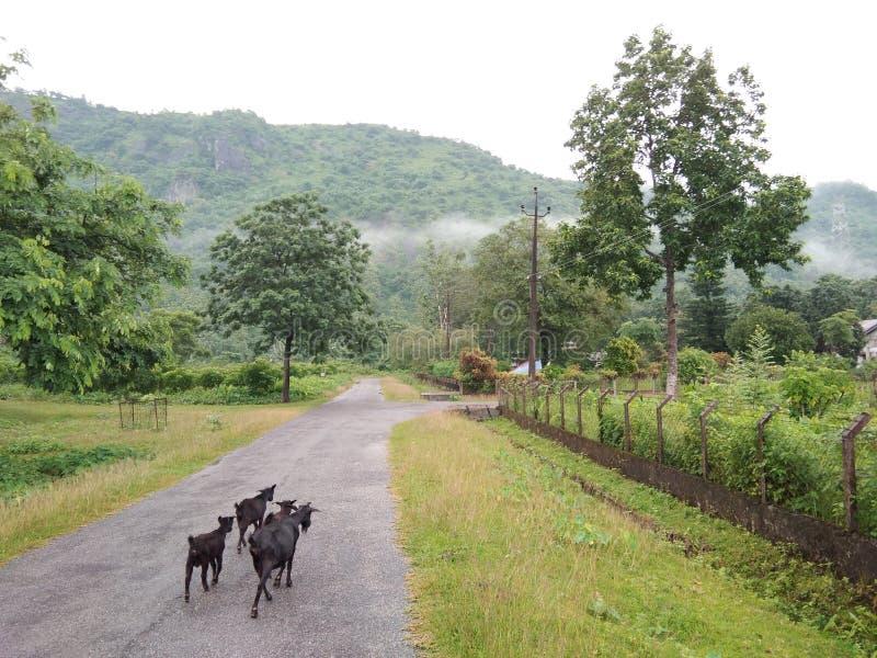Naturehills imagens de stock royalty free