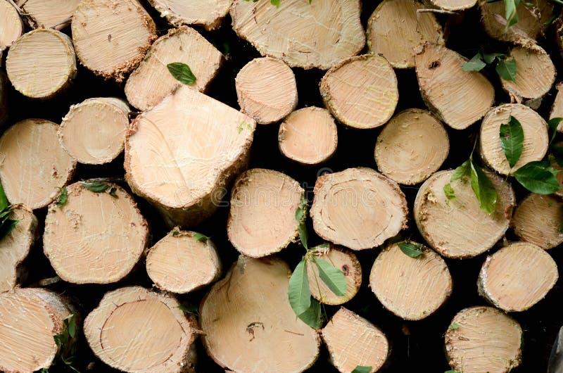 Naturel en bois frais a scié des rondins le plan rapproché, texture pour le fond, vue supérieure, photo étendue plate image stock