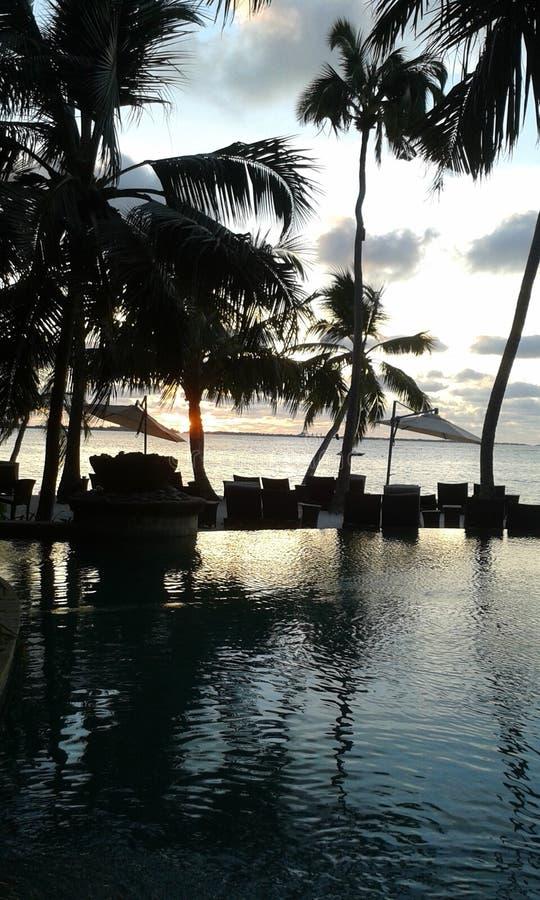 Naturel hav med hemträdgården i Sri Lanka arkivbild