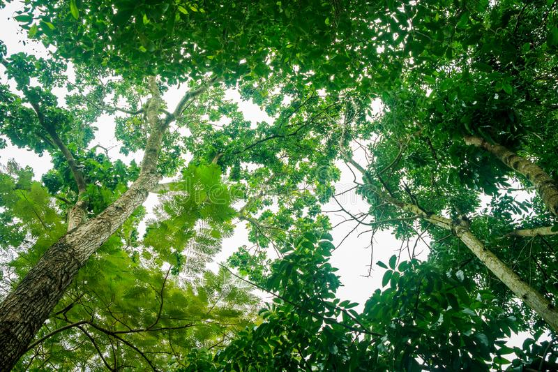 Naturel vert abstrait photo libre de droits