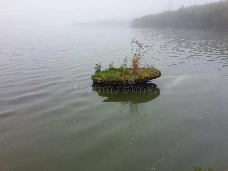 Naturen av den nordliga sommaren fotografering för bildbyråer