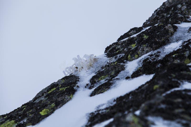 Naturen av höga berg arkivfoto