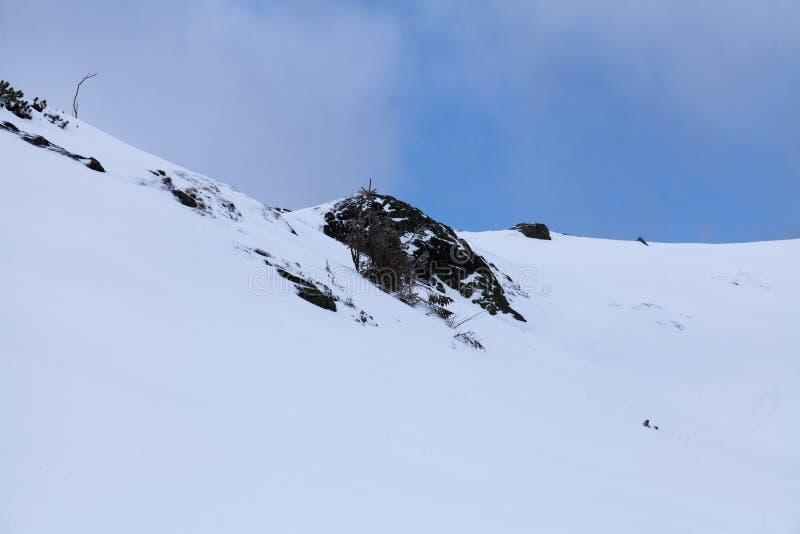Naturen av höga berg arkivbilder