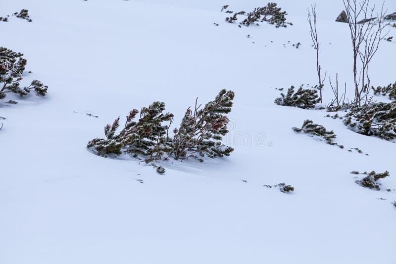 Naturen av höga berg fotografering för bildbyråer