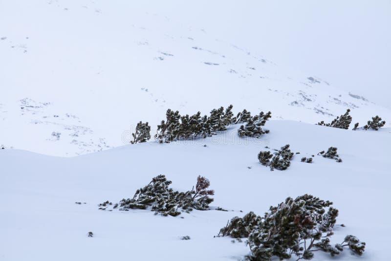 Naturen av höga berg arkivbild