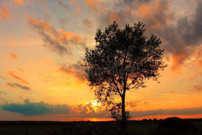 Naturen av träden arkivbilder