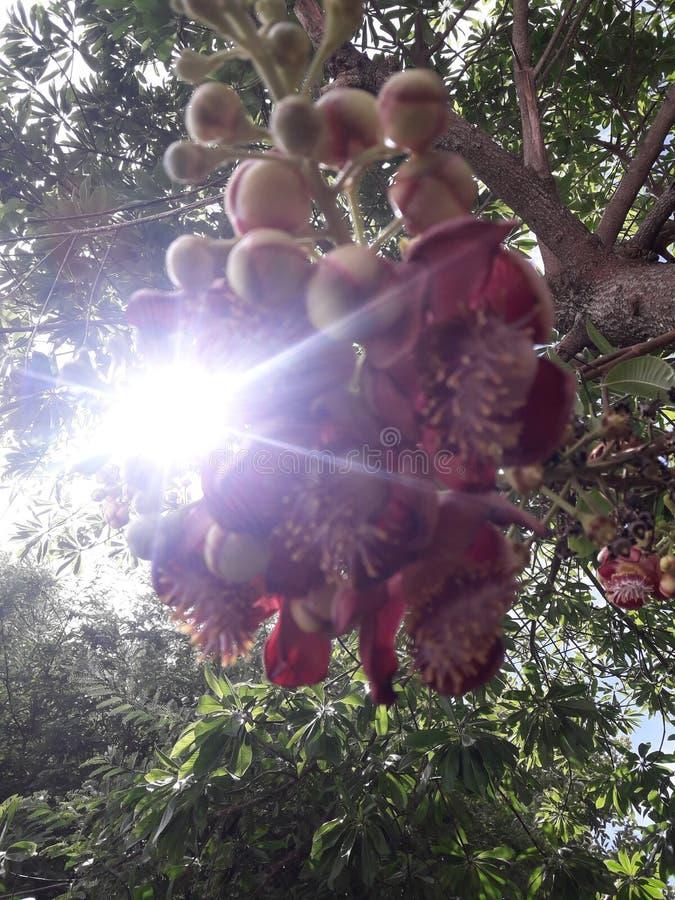 Naturen av trädet är fruktbar, med det ljusa glänsande ner royaltyfri bild