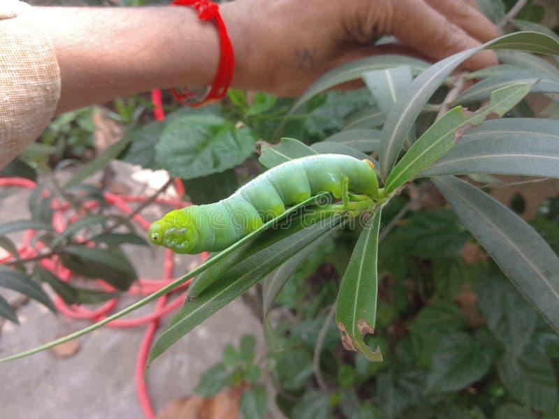 Naturen avmaskar gröna sidor fotografering för bildbyråer