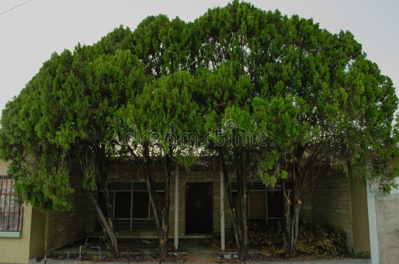 Naturen fordrar dess territorium arkivbilder