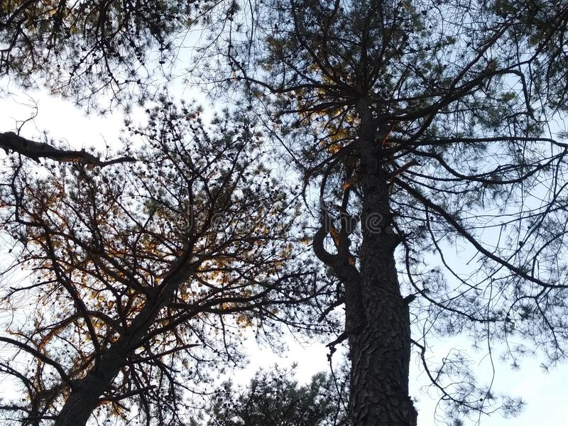 Naturen går i skogen arkivfoton